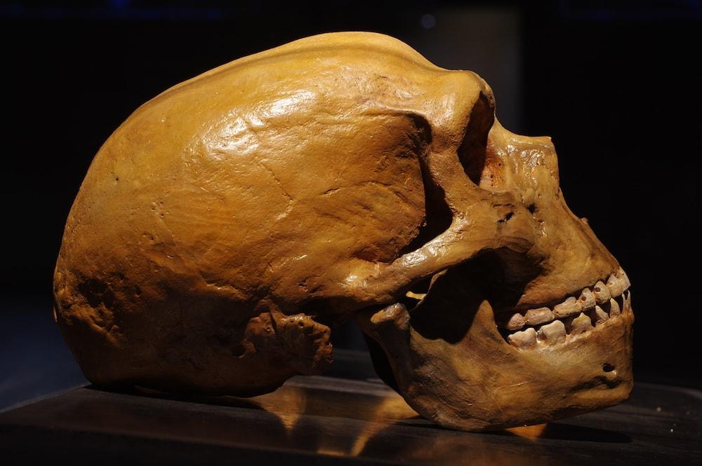 neanderthal-digital-mag